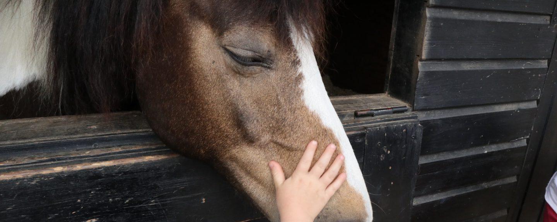 Barnhand som klappar häst på huvudet