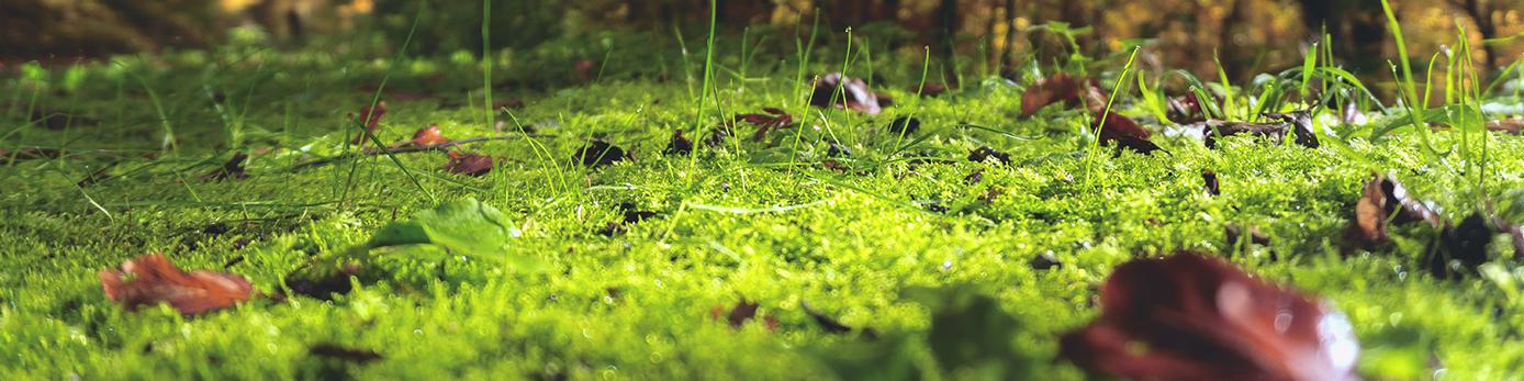 Bild på gräs och blad
